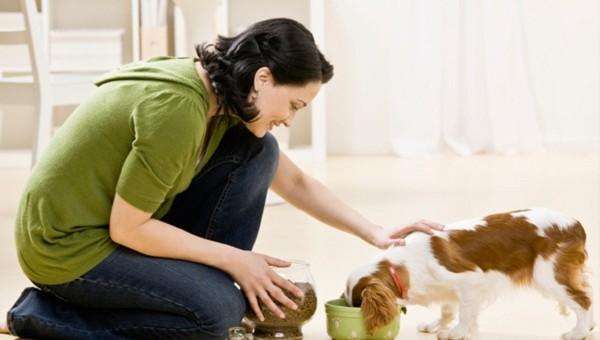 Hốt bạc với ý tưởng kinh doanh đồ dùng cho vật nuôi 1